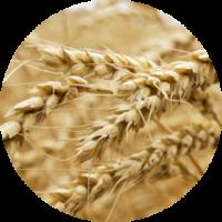 """10cc8ebdb83d20192d8d8d33def3b5ac-200x200 Мука пшеничная сорт """"Экстра"""" 2 кг"""